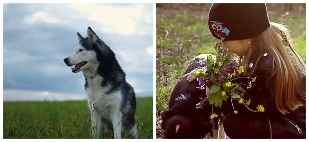 Specialisterna berättar om hemväxter som kan skada hundar