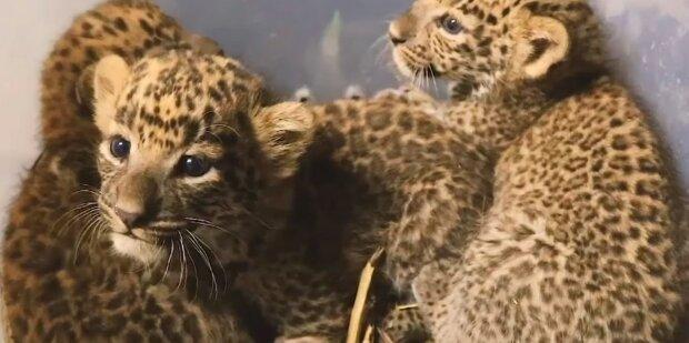 Screenshot: YouTube/Wildlife SOS