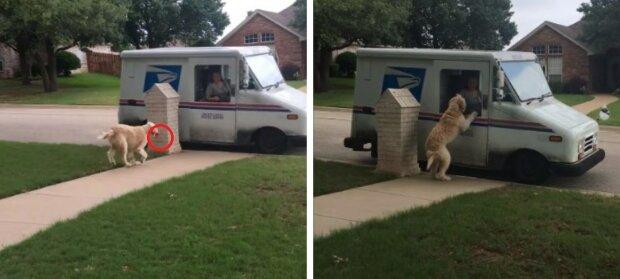 Hunden Reggie ger brevbärare en ros i utbyte mot morgontidningen