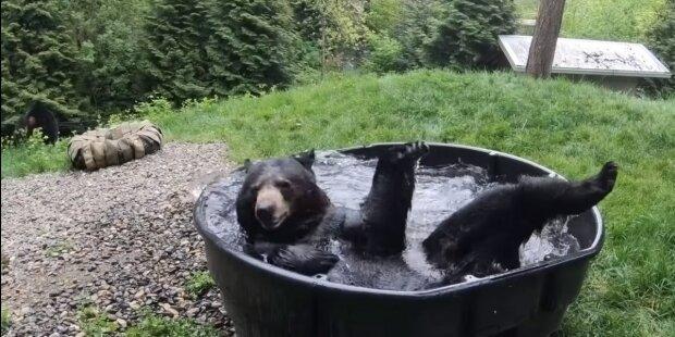 Screenshot: YouTube/Oregon Zoo