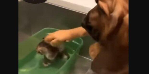 Screenshot: YouTube/Центральная Ветеринарная Клиника в г. Архангельск